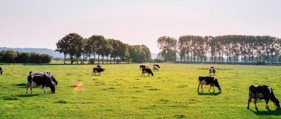 Immobilier : les terres agricoles