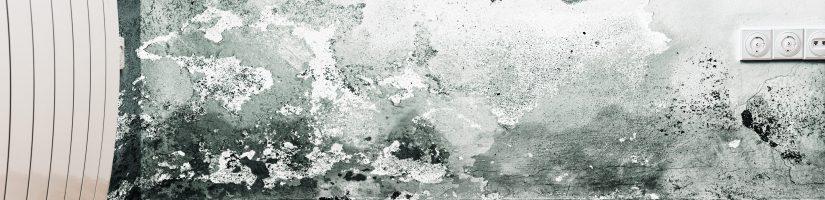 mur humide dans maison insalubre