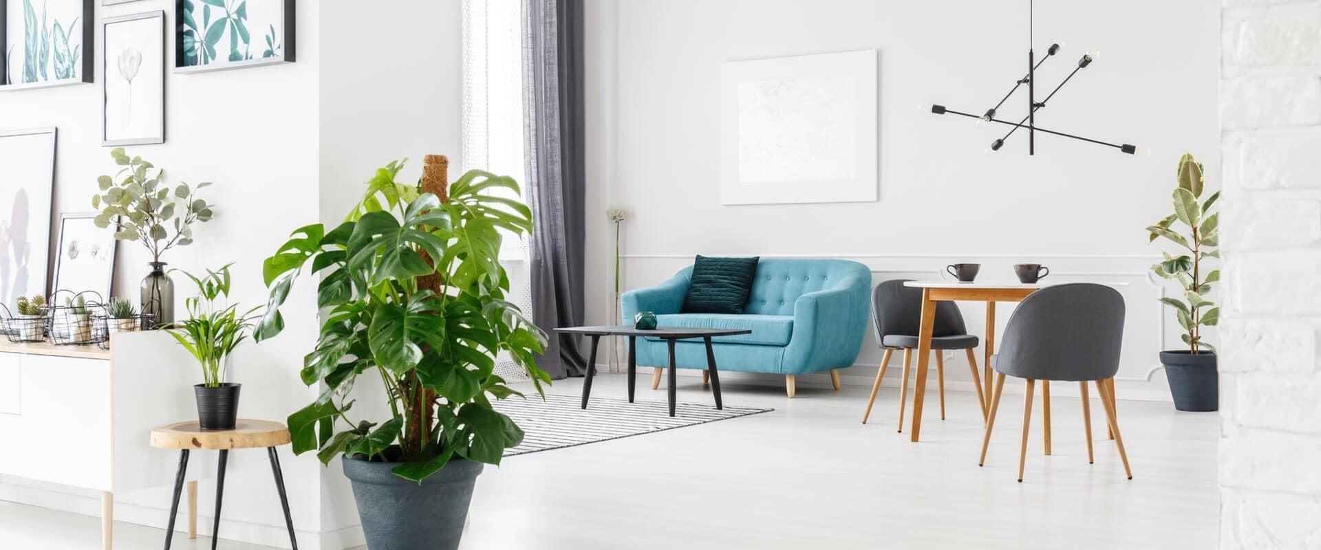 nonprofessionnel-location-meublée